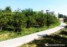 白沟新城东一环(五一路至津保路)道路两侧绿化及分车带提升工程