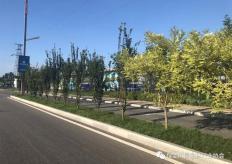 涿州市盛福大街 ( 范阳路- - 华阳路 )