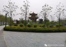 易县滨河公园工程