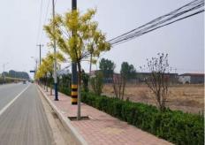 庞口镇庞石路南北两段景观改造提升工程勘察设计施工EPC总承包01标段