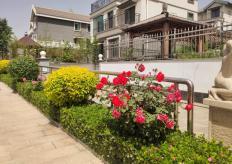 2019-2020年度市优工程——易县天光 C 区景观绿化及其附属设施工程施工